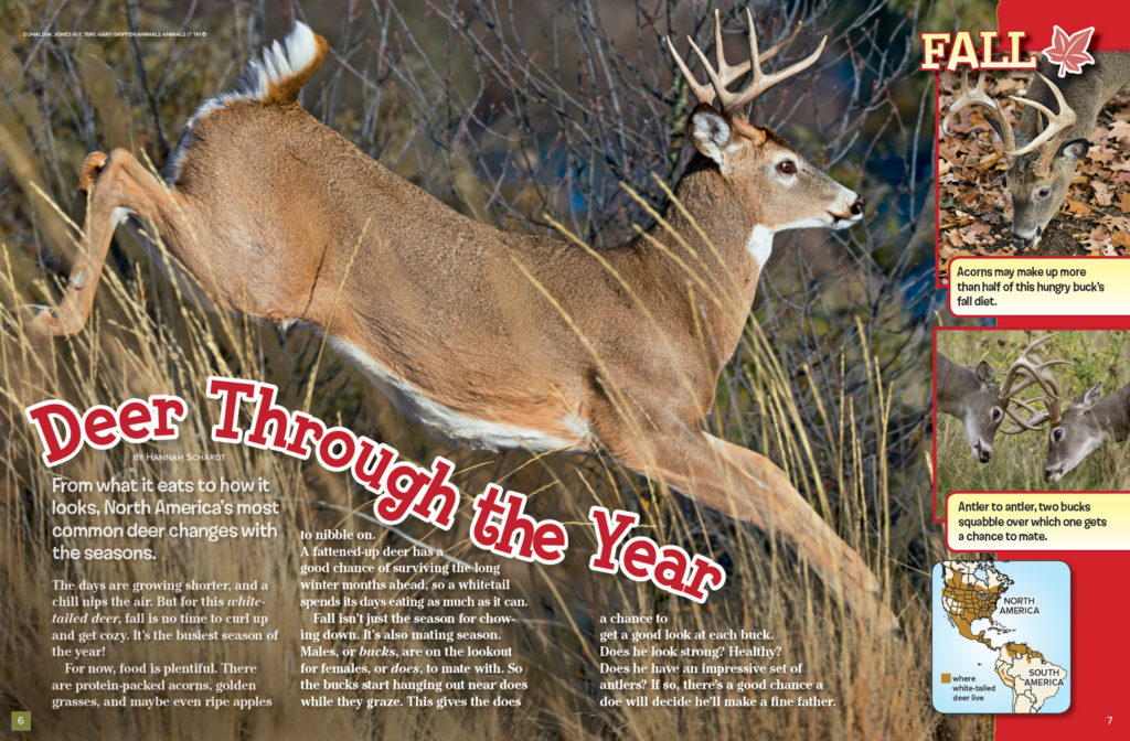 Ranger Rick Deer November 2016 1