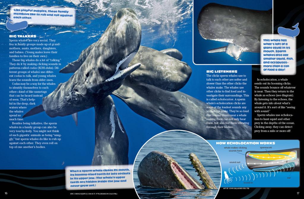 Ranger Rick Sperm Whale November 2016 2