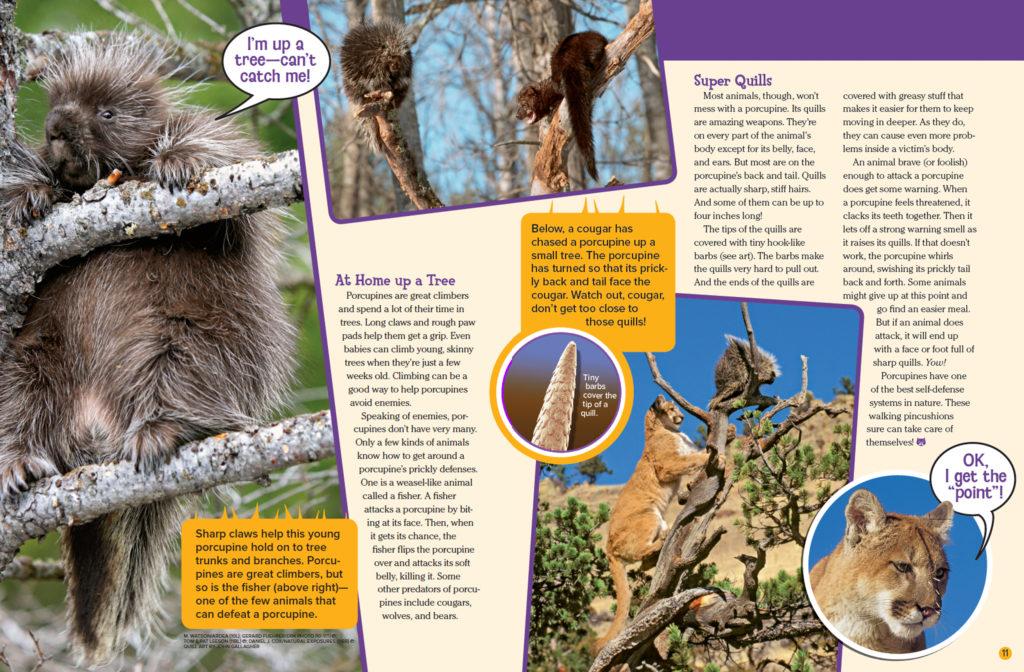 Ranger Rick Prickly Porcupines June July 2016 3