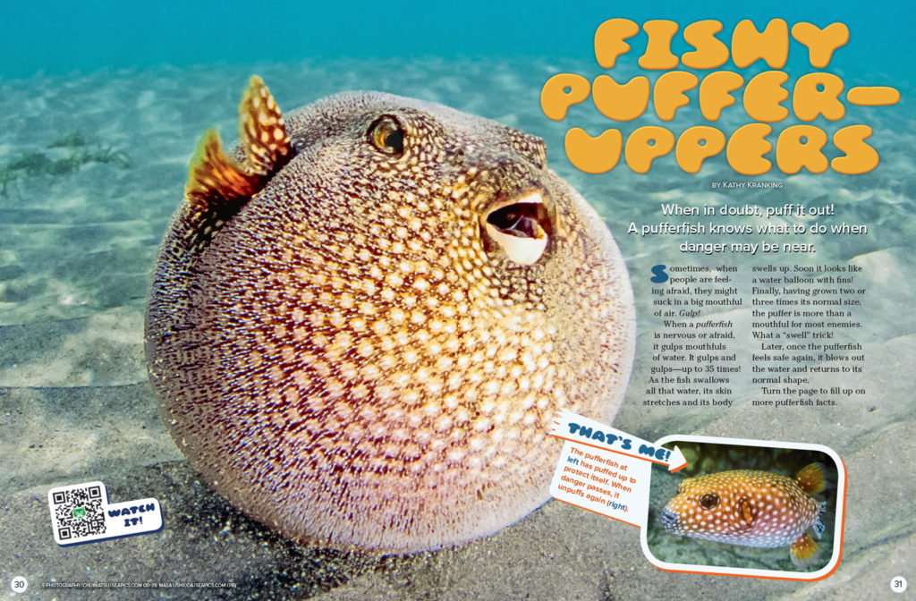 Ranger Rick Pufferfish September 2016 1
