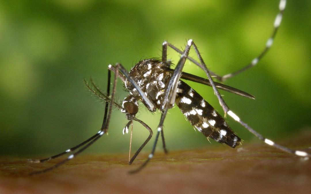 Muggenwerende maatregelen