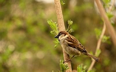 Vogelgriep/vogelpest