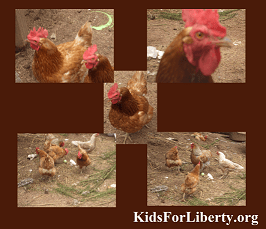 Chicky Booms 2