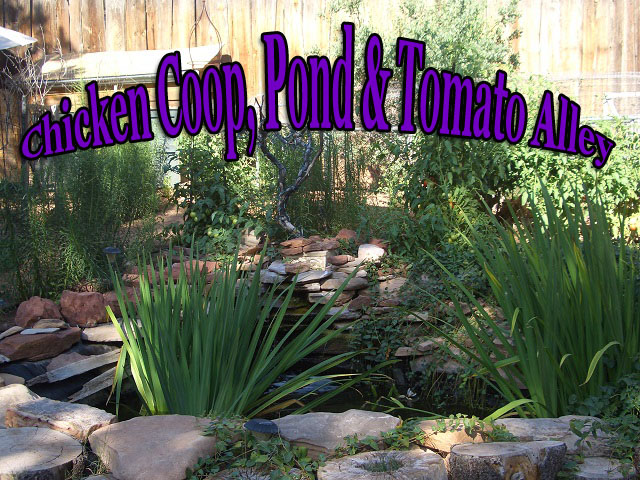 My Pond and Chicken Coop Purple copy