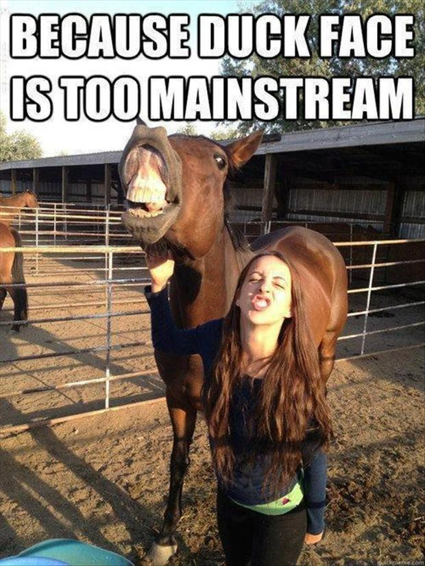 funny-horse-pictures1