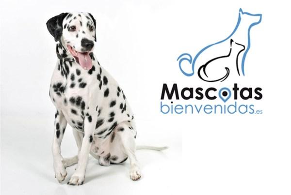 Sesión fotográfica con Mascota en Zaragoza