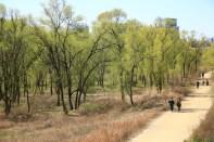 Lush wetland Yeouido Ecological Park