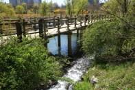 Ponds Streams Yeouido Saetgang
