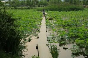 Semiwon water walkway