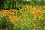 Wild flowers Haeyeorim Gardens