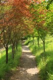 Nature path Haeyeorim Gardens Korea