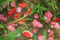 Petals Haeyeorim Gardens