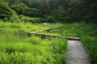 Wetland walkway Haeyeorim Gardens
