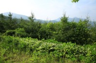 Natural landscape Haeyeorim Gardens Gyeonggi
