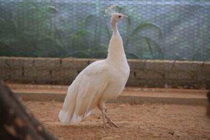 Animal Farm Seoul Anseong Farmland 안성팜랜드