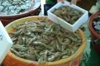 Anmyeondo shrimp festival Korea