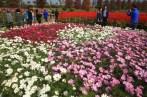 Flower park, Guri Citizen's Hangang River Park