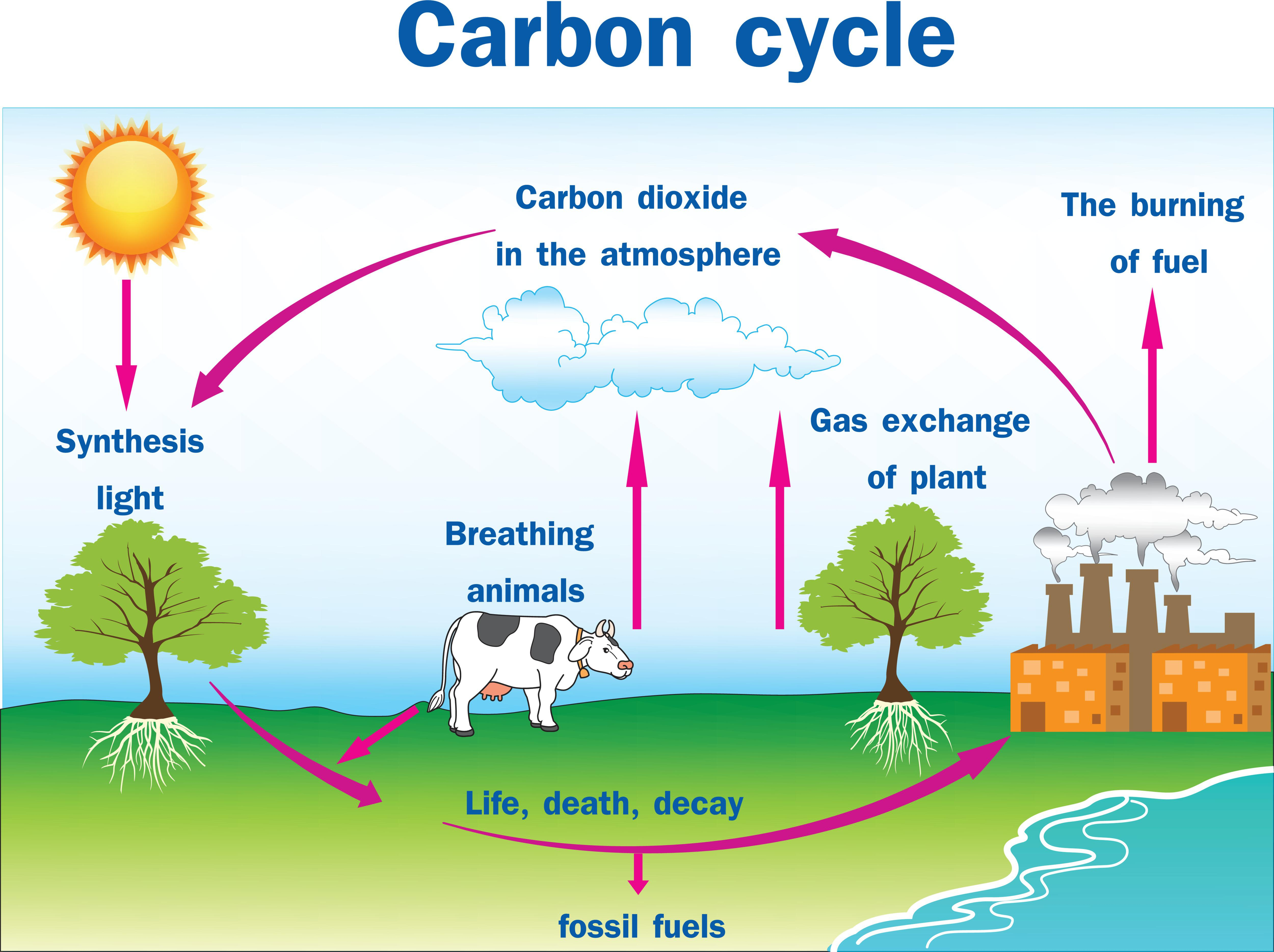 Vector Illustration Of Carbon Cycle