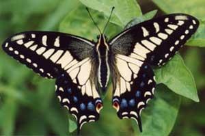 Types Of Butterflies Kids Growing Strong
