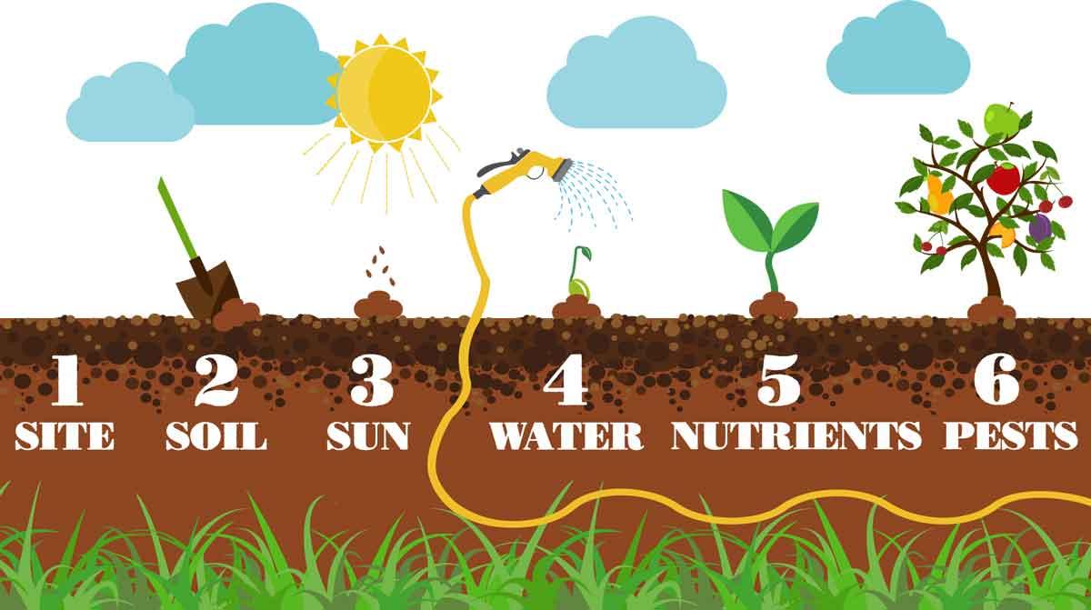 Best Plants Grow Inside