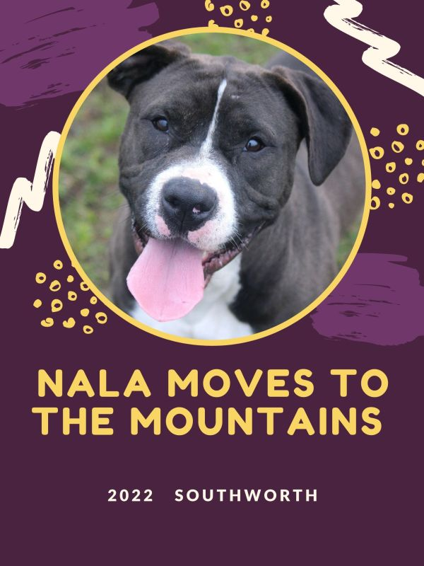 Nala moves to the mountains.