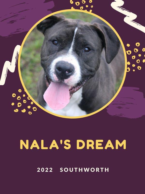 Nala's dream.