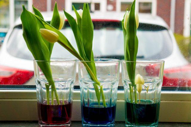 tulpen verven benodigdheden   Babies KItchen