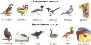 ptica1