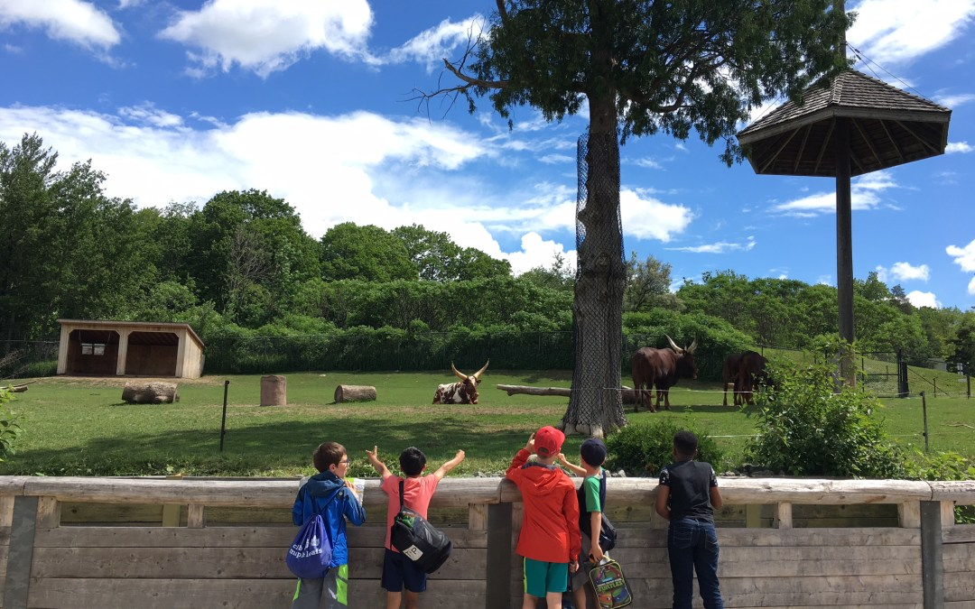 The Best Age to Visit the Toronto Zoo