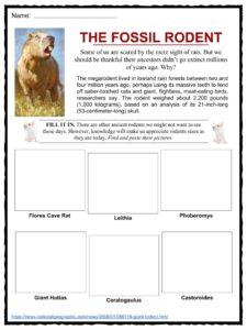 Rodent Facts Worksheets Species Amp Habitat Information