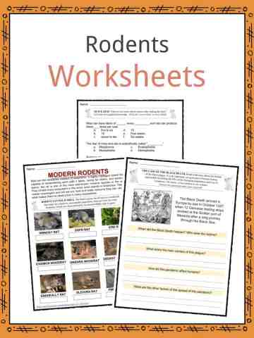 Rodents Worksheets
