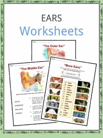 Biology Worksheets Lesson Plans Amp Study Material For Kids