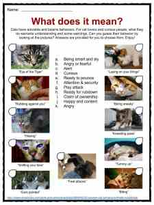Cat Facts, Worksheets, Species, Diet & Information For Kids