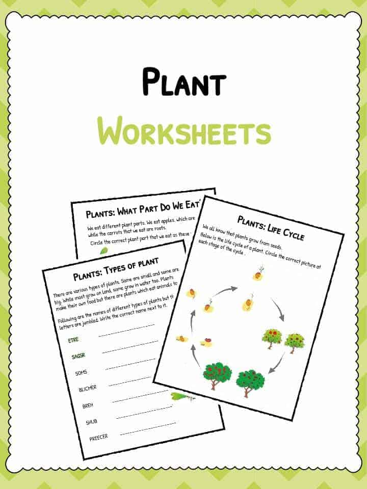 Plant Worksheets | Plant Life Cycle Worksheet | KidsKonnect