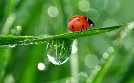 ladybug-facts