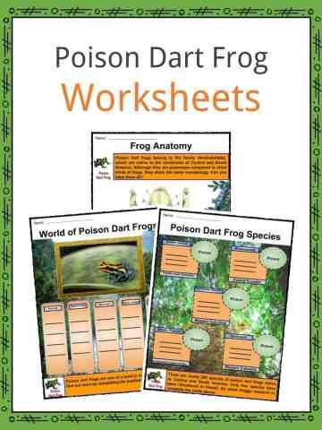 Poison Dart Frog Worksheets