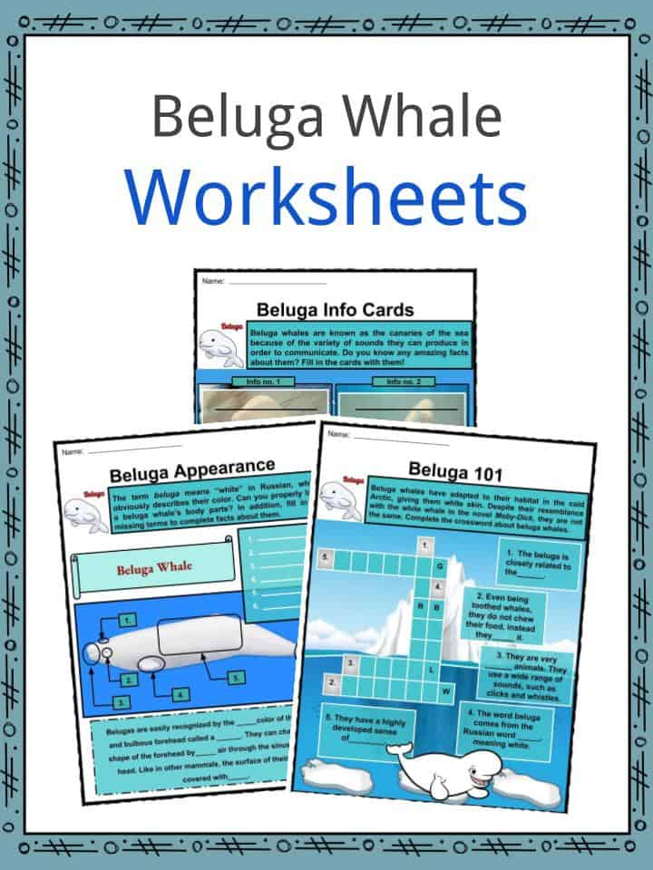 Beluga Whales Facts, Worksheets, Habitat, Anatomy and Life ...