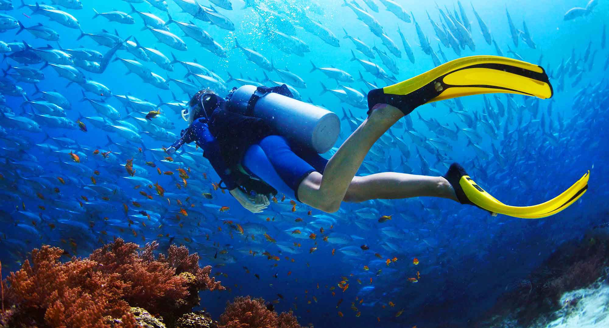Scuba Facts Worksheets Amp The World Of Scuba For Kids