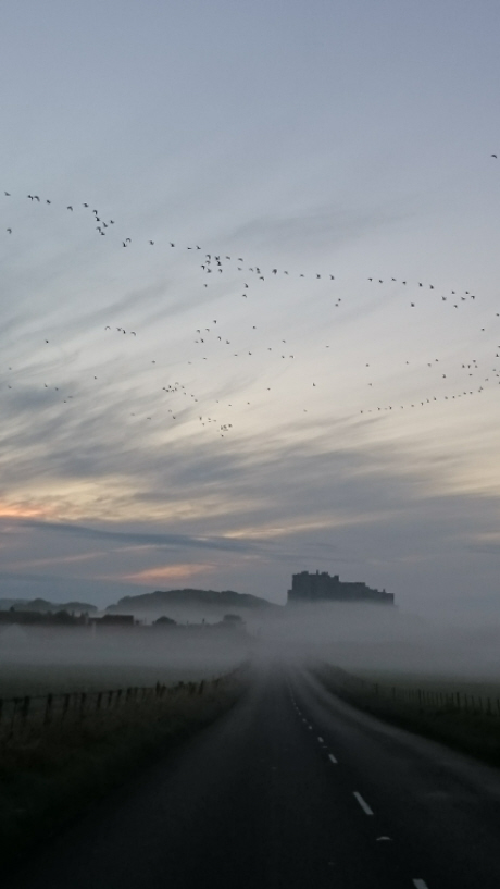 Image of Bamburgh castle-at-twilight-shrouded-in-mist-with-road-in-foreground-and-birds-flying-over