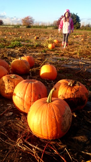 Image of child-in-field with close up pumpkins in foreground