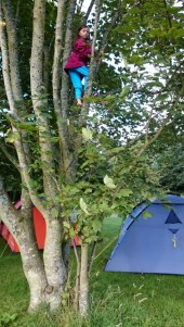 Image of girl-climbing-tree-with-tents-in-background