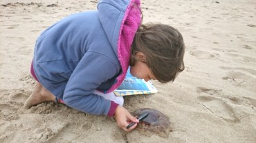 Image of girl-on-beach-investigating stranded jellyfish with a pen