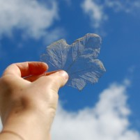 Image of sycamore-skeleton-leaf-in-hand-behind-held-up-to-blue-sky-and-clouds