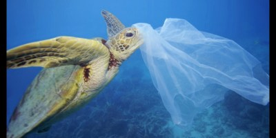 Image of turtle swimming in blue ocean with plastic bag hooked over end of beak