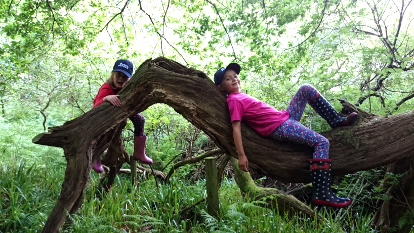 Image of children in red and pink clothing and dark caps climbing on tree trunk