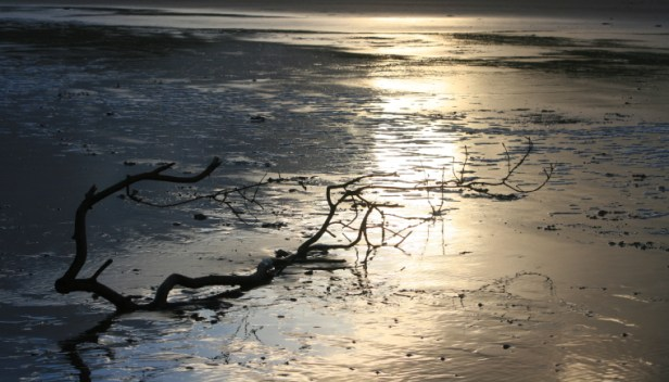 driftwood-branch-on-wet-beach-at-sunset