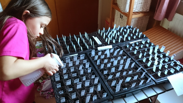 Image of girl-watering-tray-of-seeds