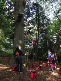 Image of group-of-people-climbing-tree-in-harnesses-with-ropes