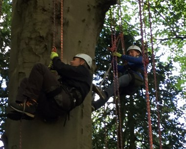 Image of man-and-woman-climbing-tree-in-harnesses