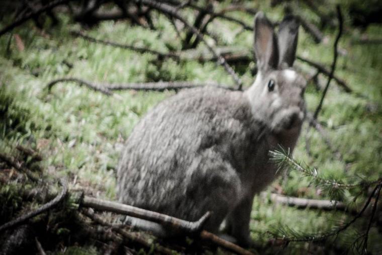 Image of rabbit in undergrowth